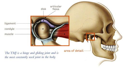 TMJ Therapy - illustration of skull